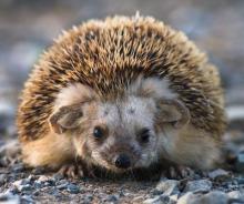 Зоологи ТГУ изучают устойчивость животных в условиях меняющейся среды
