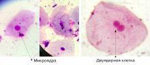 Использование сотового телефона влияет на строение человеческих клеток