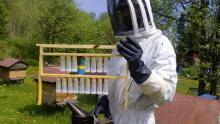 Ученые БИ ТГУ создали племенное ядро чистопородной среднерусской пчелы