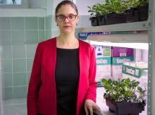 «Прививка» от стресса: ученые тестируют новый способ защиты растений